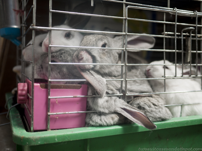 Rabbits stuffed into cages